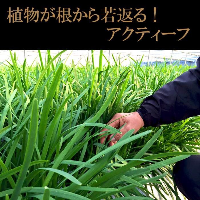 【ふるさと納税】植物が根から若返る!アクティーフ