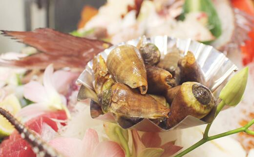【ふるさと納税】[037008]チャンバラ貝 10kg