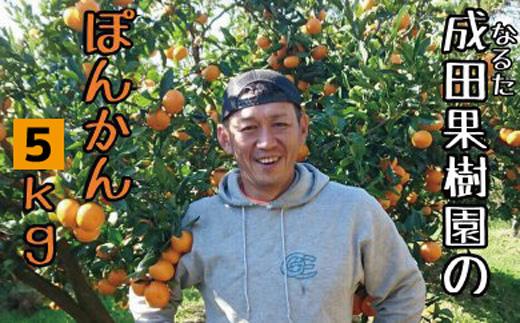 成田果樹園の ぽんかん 使い勝手の良い 再再販 は宿毛の田ノ浦地区で栽培されています ふるさと納税 成田果樹園のぽんかん5kg家庭用