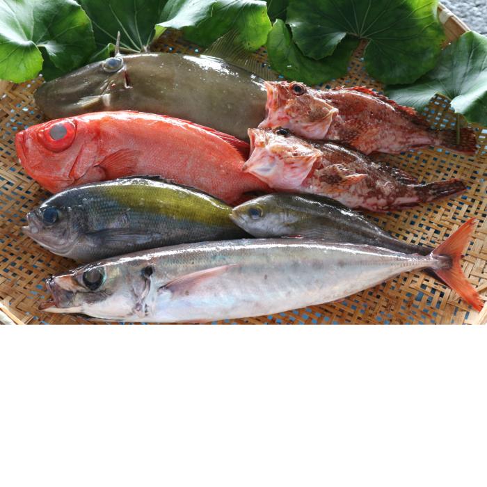 【ふるさと納税】【C-4】土佐清水の鮮魚詰め合わせ(寄附金20,000円コース)