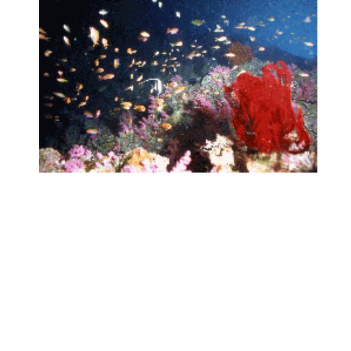 【ふるさと納税】【AJ-3】ボートダイビングチケット 足摺ダイビングセンター(2ダイブ1名分)