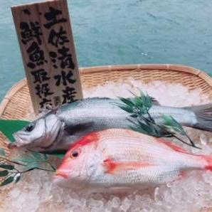 【ふるさと納税】【BL-1】土佐清水の鮮魚詰め合わせ定期便【10回】