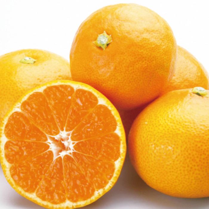 全国にファンを持つ 香南市のブランド山北みかん 温室で育てられ 糖度センサーの選別で合格したみかんは 皮が薄くてジューシー 糖度も高く甘みにコクがあり程よい酸味が絶妙です ふるさと納税 山北温室みかん1.2kg 柑橘 期間限定配送 数量限定 のし対応可 結婚祝い 送料無料 A-191 令和4年発送分 果物 お洒落