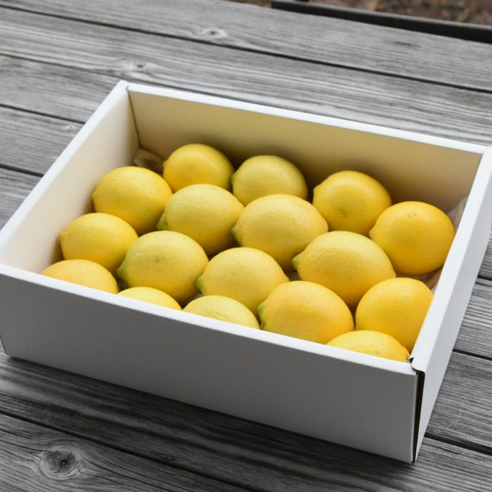 のし B-311 ギフト ラッピング 【ふるさと納税】人気ローズガーデンのフレッシュレモン2.5kg B-311送料無料