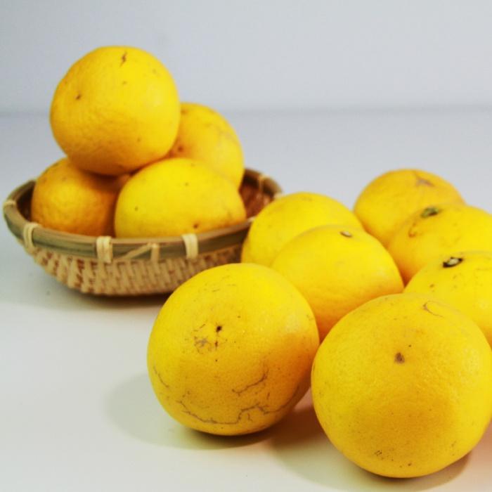 おいしく食べていただくために 秀逸 樹で完熟させてお届けします 皮には傷がありますが お味はギフト用と一緒の甘ずっぱい小夏です ふるさと納税 土佐の高知のくだもの畑 ハウス小夏 家庭用 5kg 毎日がバーゲンセール 送料無料 おすそ分け 訳あり デザート 柑橘 小夏 おやつ わけあり B-344 フルーツ