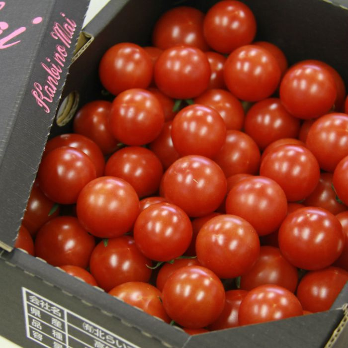 糖度8度以上のフルティカ品種のフルーツトマトを箱に詰めてお届けします ふるさと納税 高糖度 高機能性 フルーツトマト1Kg 完熟 糖度8以上 送料無料数量限定 期間限定配送 対応可おやつ おかず 全商品オープニング価格 激安挑戦中 のし おつまみ 包装 A-330 贈り物 トマト大好き