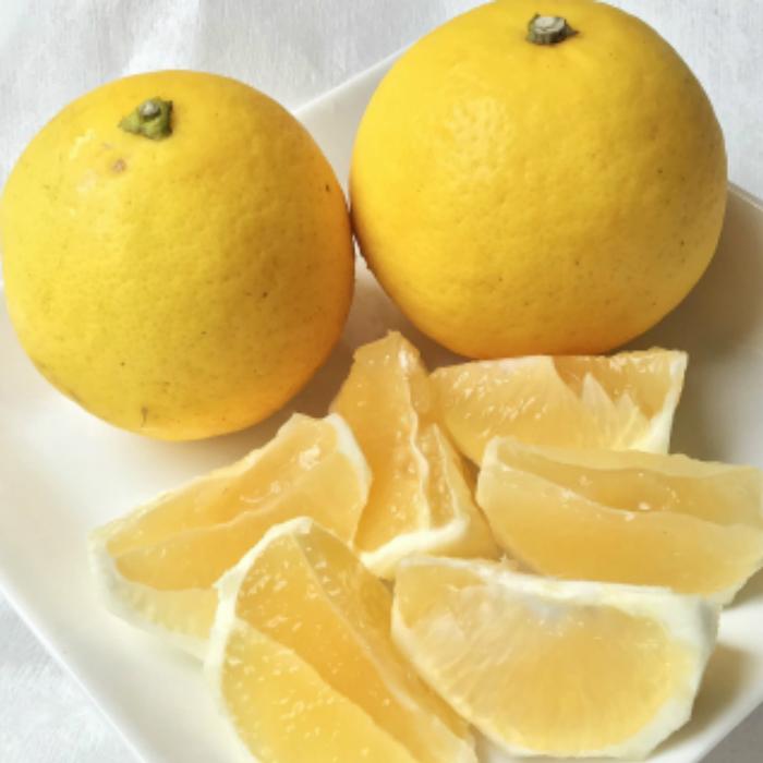 家庭用 C-184 5kg送料無料 【ふるさと納税】フルーツ 柑橘有機肥料で育てた小夏