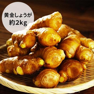 【ふるさと納税】黄金しょうが 2kg 【野菜・根菜・生姜】