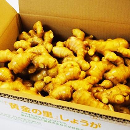 【ふるさと納税】黄金しょうが 4kg 【野菜・生姜・根菜】, クリスマス屋 88923b7b