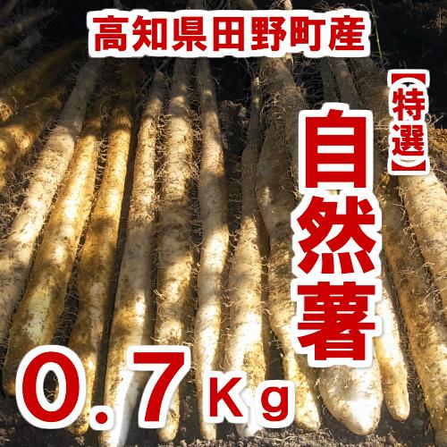 【ふるさと納税】≪予約受付中≫四国一小さなまち田野町産特選「自然薯(じねんじょ)」0.7Kg 全然粘りが違います。汁物にしても溶けない粘りの強さを是非ご賞味ください。