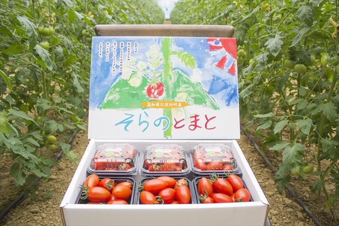 海抜約1000mの山頂で栽培した 高級 甘くて美味しいこだわりのミニトマト容量もたっぷりで大満足なセットです ふるさと納税 0072701 約1.2kg そらのミニトマト 好評受付中