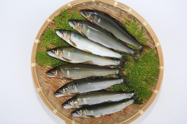 【ふるさと納税】高知県仁淀川の天然鮎(冷凍)約1kg