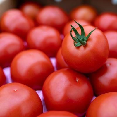【ふるさと納税】Fbg-06 赤さがリコピン満載の証!四万十産トマト「深紅」4kg