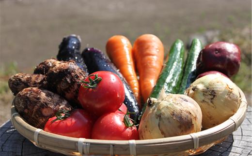 メーカー直売 ふるさと納税 メーカー公式ショップ UIC名水うきはの無農薬減農薬お野菜セットM
