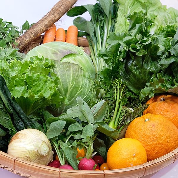 【ふるさと納税】C-018.旬の野菜と果物セット