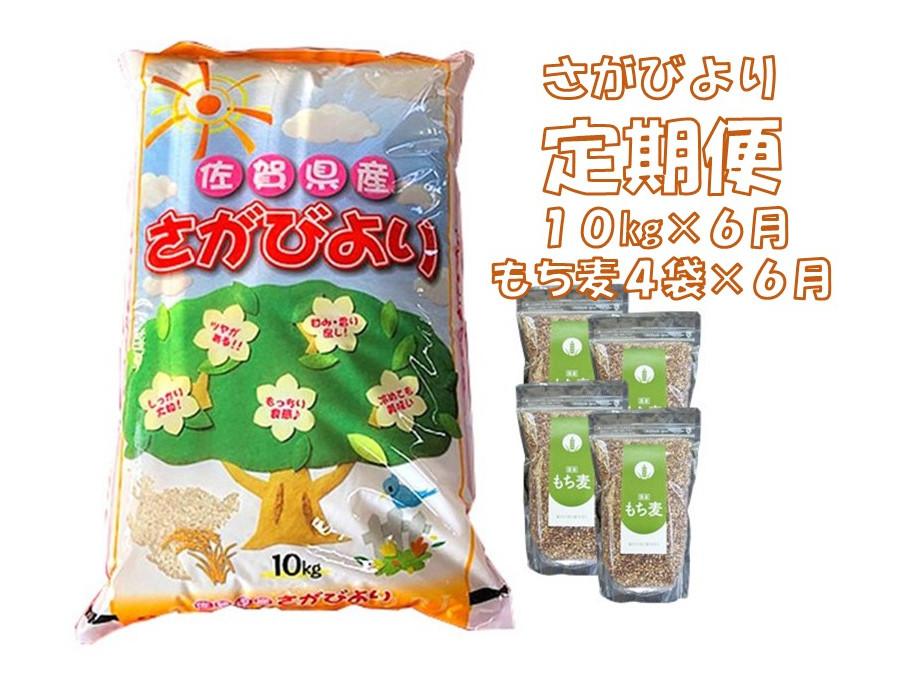 【ふるさと納税】JE4-002R 6カ月定期便さがびより 10kg&もち麦4袋(計60kg・24袋)