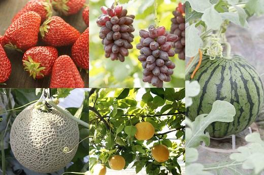 【ふるさと納税】厳選フルーツ定期便  小玉スイカ、ぶどう、梨、メロン、いちご、 5回発送 【養生市場】