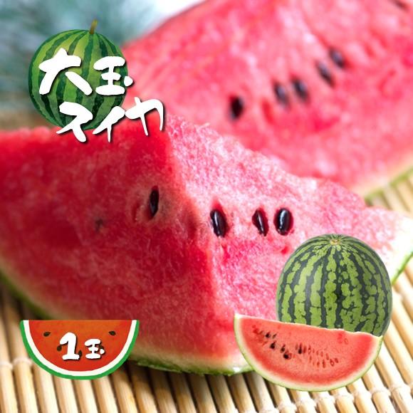 【ふるさと納税】大玉スイカ(1玉)熊本県和水町産