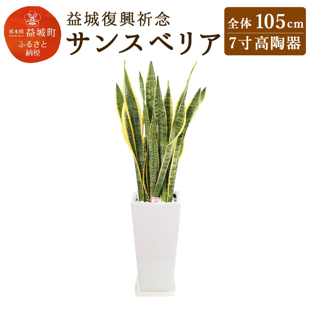 育て方が簡単で、特に乾燥に強い植物で葉の模様から別名「トラノオ」とも呼ばれています。テレビなどで「マイナスイオンを多く発生する」と話題になりました。  【ふるさと納税】益城復興祈念 サンスベリア 全体105cm 7寸(高さ40cm×幅20cm) 高陶器 植物 観葉植物 インテリア 九州産 国産 送料無料