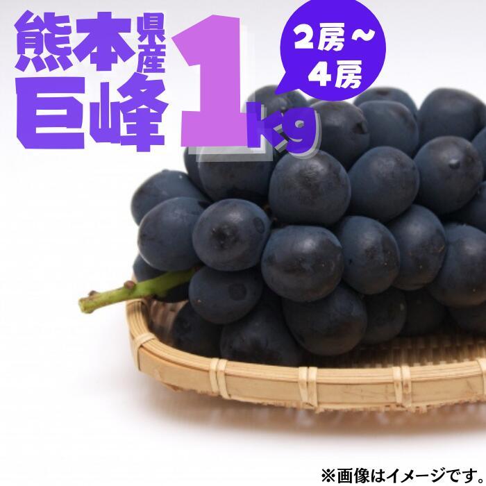やっぱり巨峰でしょ ふるさと納税 先行予約 2~4房 春の新作 熊本県産巨峰1kg ついに再販開始