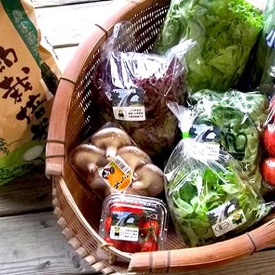 【ふるさと納税】山都の旬!お野菜、お米の詰め合わせ 【野菜・セット・詰合せ・お米】