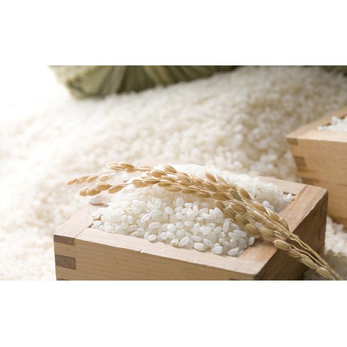 【ふるさと納税】島木かぐや米 (4.5kg) 【お米】