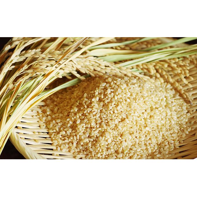 【ふるさと納税】南阿蘇 神の前湧水米(玄米30kg) 【玄米・お米・おこめ】