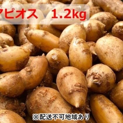 【ふるさと納税】インディアンのスタミナ源!桑原農園の熟成アピオス1.2kg 【野菜・根菜】 お届け:2020年1月下旬~9月上旬