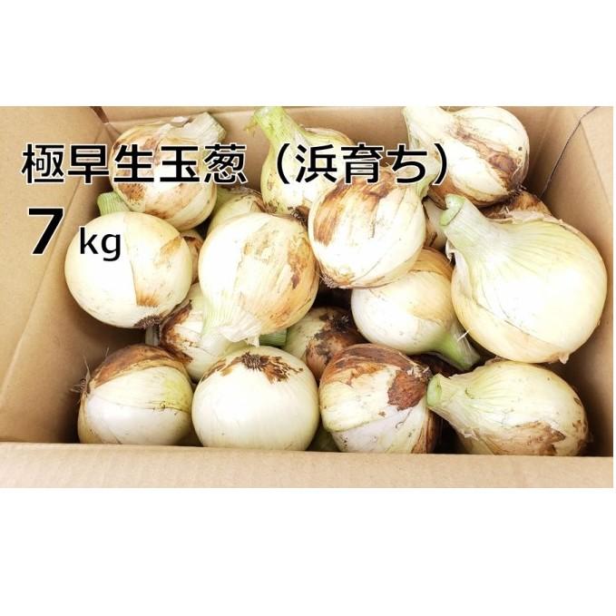 【ふるさと納税】極早生玉葱(浜育ち)7kg 【野菜・玉ねぎ】 お届け:2020年4月中旬~7月中旬