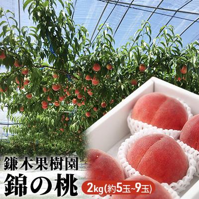 熊本県錦町 ふるさと納税 2021年発送 即納最大半額 錦の 桃 2kg 約5玉~9玉 配送不可:離島 もも 爆安プライス 果物 フルーツ お届け:2021年6月中旬~8月下旬