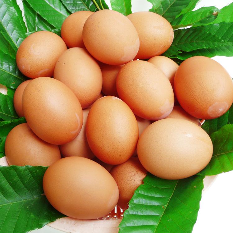 【ふるさと納税】熊本県あさぎり町 森田農場放し飼い「有精卵」45個+破卵保障5個入り    お届け時期:入金確認後20日前後