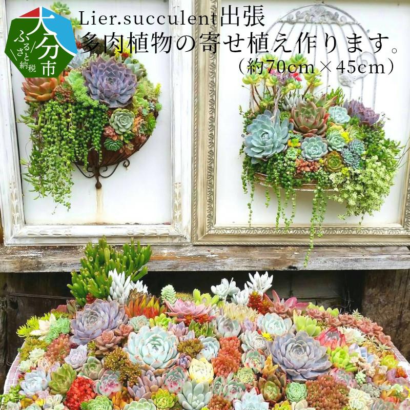 【ふるさと納税】Lier.succulent 出張多肉植物の寄せ植え作ります。(約70cm×45cm) R07009【大分県大分市】