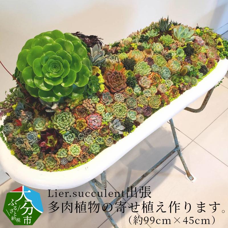 【ふるさと納税】Lier.succulent 出張多肉植物の寄せ植え作ります。(約99cm×45cm) R07010【大分県大分市】