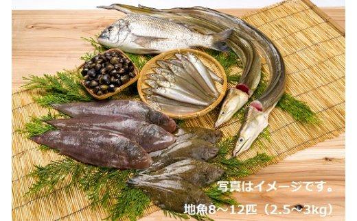【ふるさと納税】獲れたら発送!!地魚セット(高田魚市場)