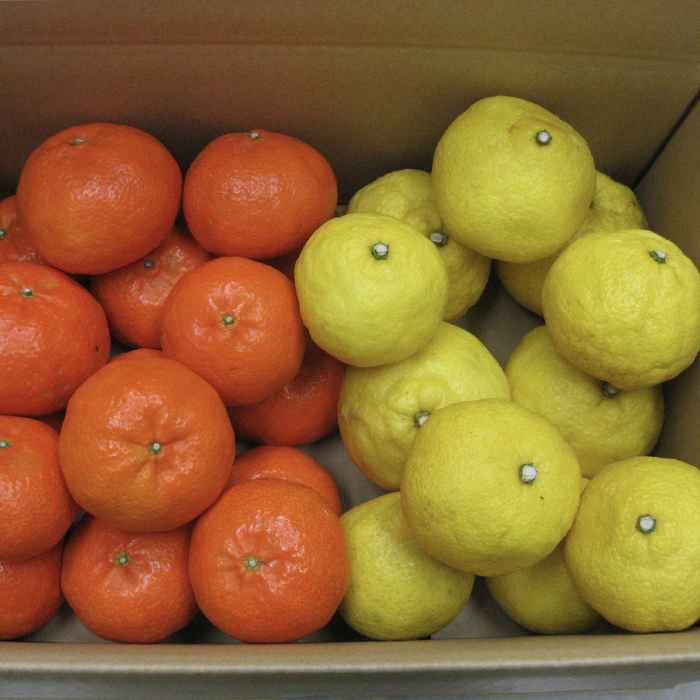 【ふるさと納税】【ご家庭用】ハウスアンコール&はるか 各2kg 詰合 予約 果物 フルーツ<06-A0060>