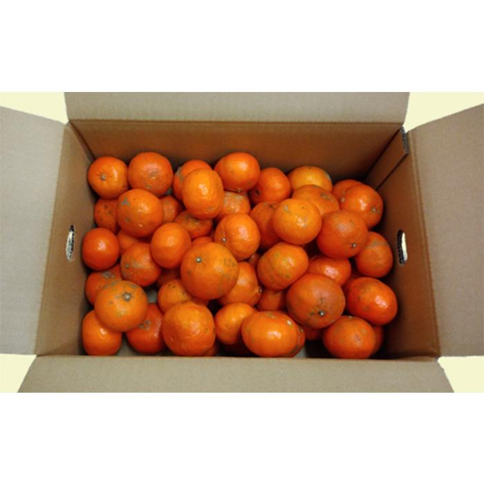 【ふるさと納税】【ご家庭用】杵築の柑橘食べ比べ定期便(全3回)<06-Z0007>