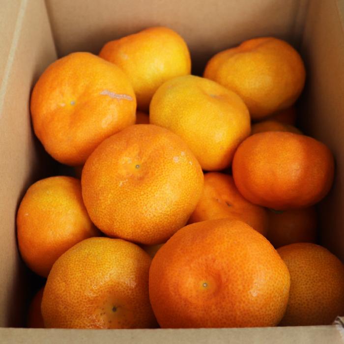 【ふるさと納税】【ご家庭用】オレンジ農園のハウスみかん 約2.5kg ※7月中旬~<37-A0042>