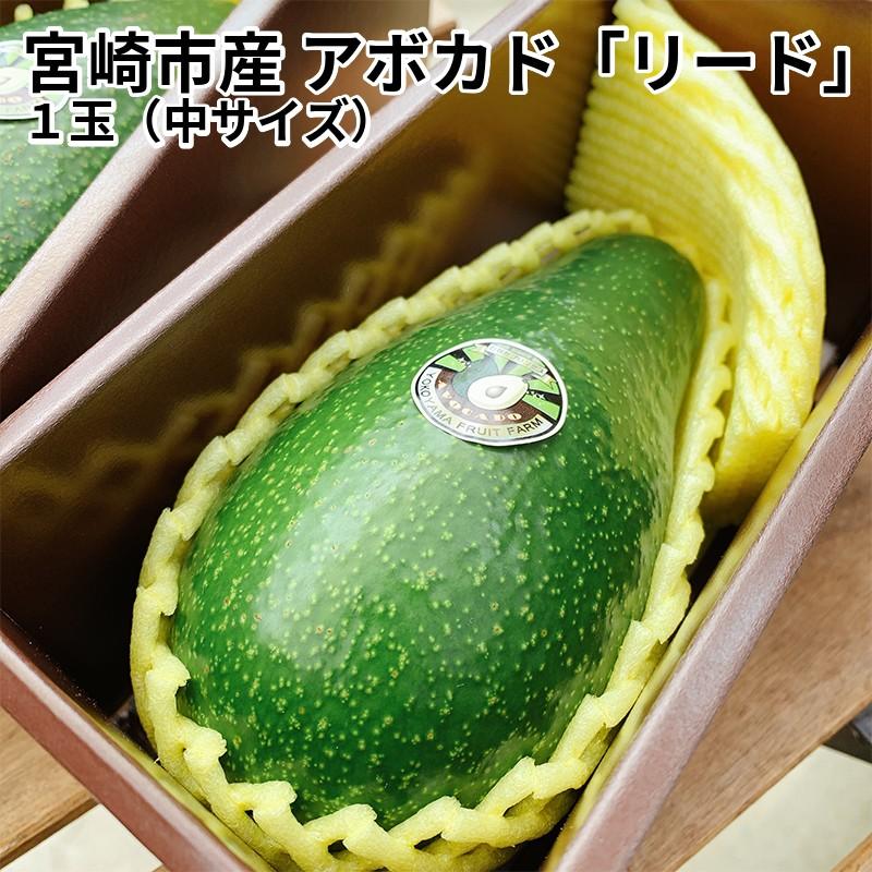 【ふるさと納税】宮崎市産アボカド「リード」1玉(中サイズ)