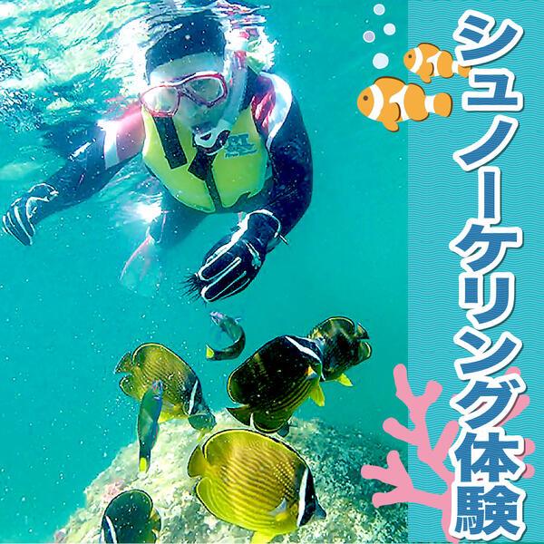 【ふるさと納税】シュノーケリング体験 海 アウトドア 宮崎県 延岡市