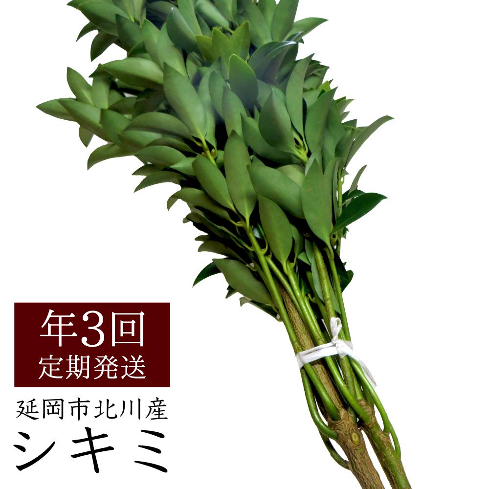【ふるさと納税】延岡市北川産 シキミ(80cm程度)(3月・8月・12月定期配送)
