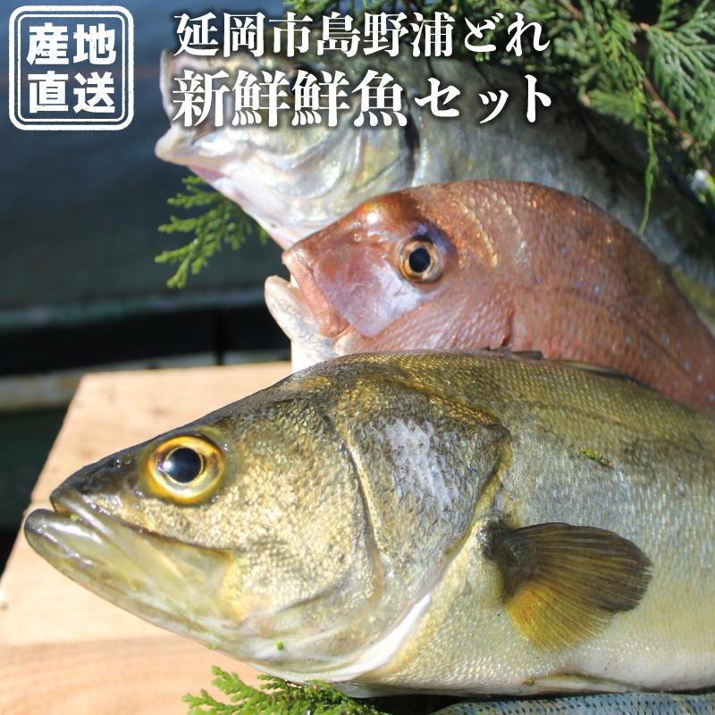 【ふるさと納税】結城水産 延岡市島浦島育ちの厳選鮮魚セット