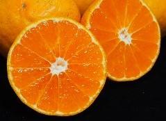 三代続く果樹園の糖度と酸度のバランスのよい美味しいみかんを園地より直送致します ふるさと納税 交換無料 先行予約 特選 化粧箱入り 大黒園の温州みかん 3kg 安心の実績 高価 買取 強化中 8-02