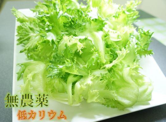 【ふるさと納税】低カリウムレタス「スイーツレタス」6株~10株