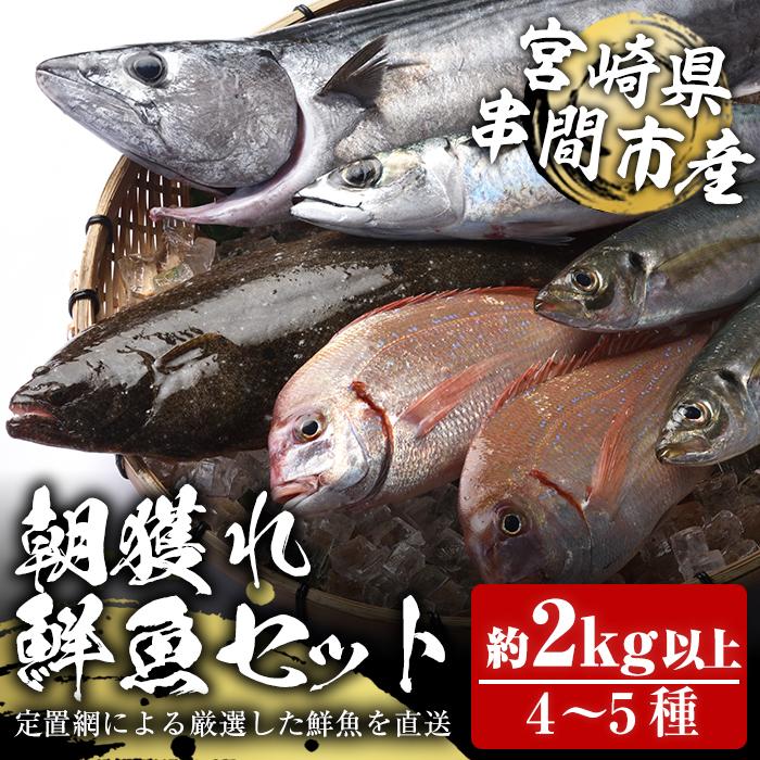 数量は多 並行輸入品 新鮮でおいしい魚をお楽しみいただけます ふるさと納税 串間市 特産品 鮮魚詰め合わせ 先行予約 2021年11月上旬から発送開始 宮崎県串間産 4~5種 KU070 朝獲れ鮮魚セット計約2~3kg 豊漁丸 海の幸 定置網による厳選 を漁師直送 朝獲れ鮮魚