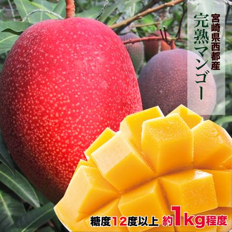【ふるさと納税】宮崎県 西都産 完熟マンゴー(JA西都)