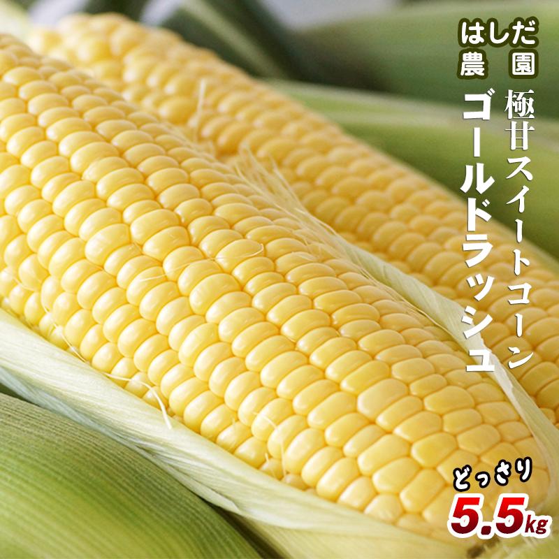 【ふるさと納税】宮崎県西都市 はしだ農園 スイートコーン「ゴールドラッシュ」5.5kg