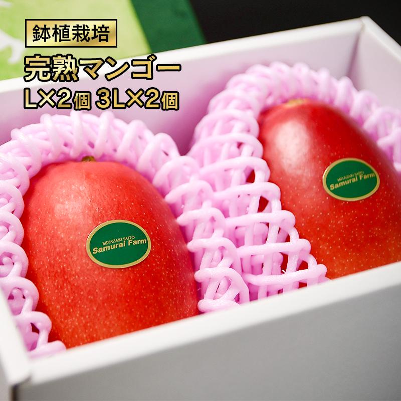 【ふるさと納税】西都産完熟マンゴー(L×2個)(3L×2個)「鉢植栽培」【数量限定】