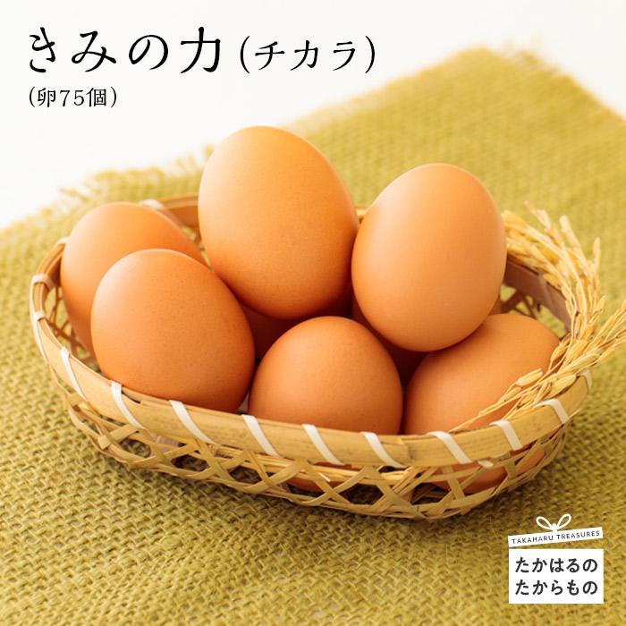 甘くておいしい逸品です ふるさと納税 宮崎県産特選 新作製品 日本限定 世界最高品質人気 きみの力 チカラ 空気と水のきれいな神武の里たかはるで ※送料無料 衛生管理に万全を期した環境の中 ミネラルたっぷりのカキガラや上質な完全配合飼料ですくすく育った鶏が産む卵は甘くておいしい逸品です たまご 卵