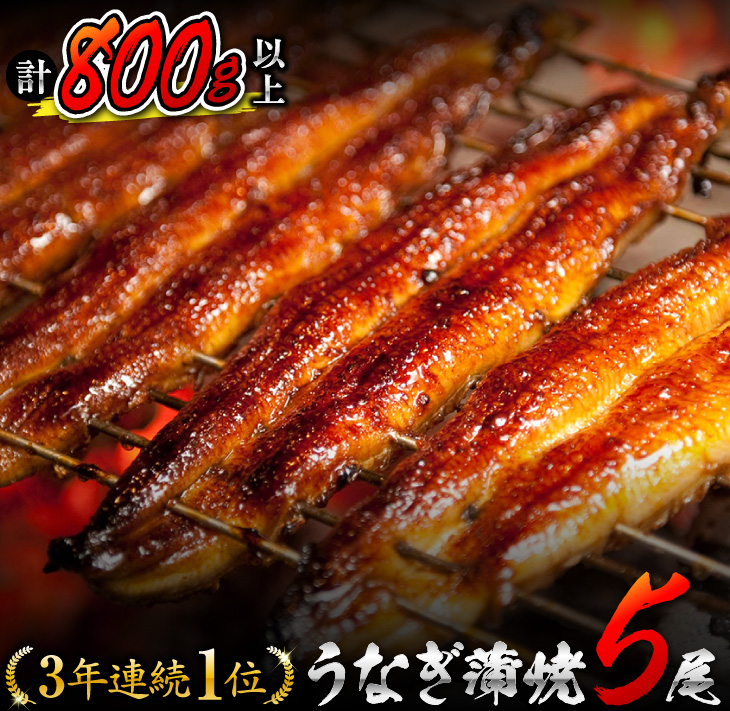 九州産 うなぎ 蒲焼 800g