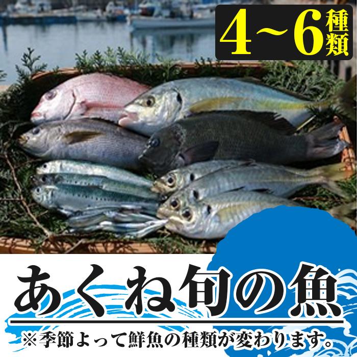 【ふるさと納税】<ご予約受付中!2020年10月1日~2021年3月15日の間に発送予定>阿久根で獲れた鮮魚をセットでお届け!新鮮なあくねの旬の魚を産地直送! 【北さつま漁協北さつま】 5-1